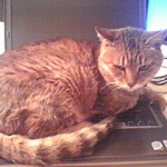 cat on the pc