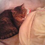 cat-slept